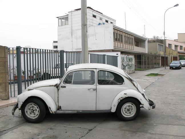 Beetles005